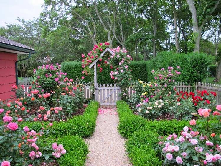 Розы в дачном дизайне