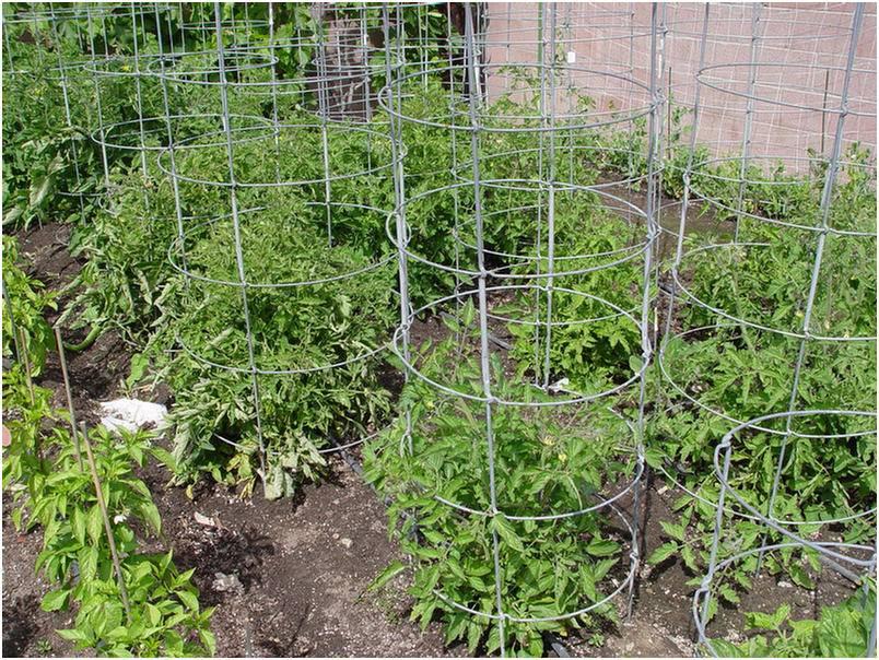 клетка для подвязки помидор