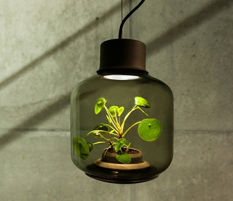 led-pflanzenlampe-pendelleuchte-zimmerpflanze-gruen-klein-topf-dunkles-glas