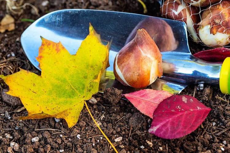 Приусадебный участок осенью
