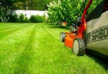 Уход за газоном, ландшафтный дизайн