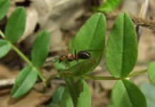 муравьи как избавиться